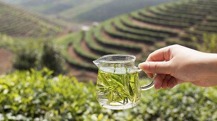Ar žaliojoje arbatoje esantys katechinai išties kenkia kepenims?