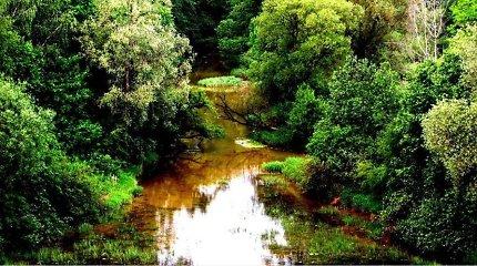Paaiškėjo, kodėl Obelies upelyje gaišo žuvys