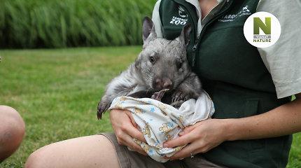 Garsiausio Australijos zoologijos sodo užkulisiai