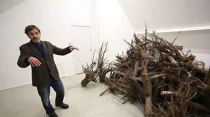 Parodoje – dešimt kubinių metrų medžių šaknų