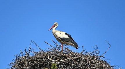 Pavasaris pamaryje ornitologo akimis: aidi pempių ir vieversių giesmės, sugrįžo pirmieji gandrai