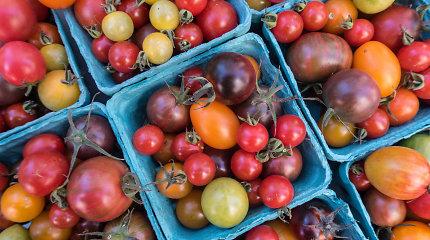 Kodėl pomidorai iš parduotuvės yra vandens skonio: kaltas vienas genas