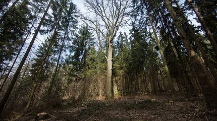 K.Mažeika: Seimo komiteto siūlymas vėl skaidyti Miškų urėdiją yra žalingas valstybei