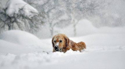 Niujorko valstijos gyventojai vaduojasi iš sniego gniaužtų