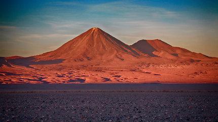 Kaip sausiausia pasaulyje dykuma vien dėl paukščių išmatų tapo vešlia oaze
