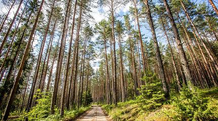 Kaimo reikalų komitetas siūlo atmesti prezidento veto dėl miško žemės įsigijimų ribojimo