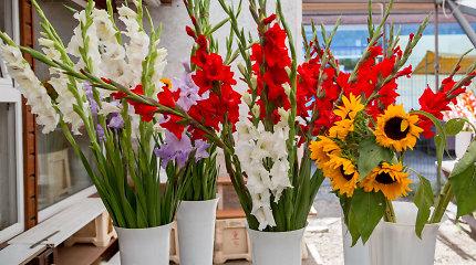 Rugsėjo 1-osios gėlės: kokios populiariausios ir kaip turguje ieškoti pigesnių?