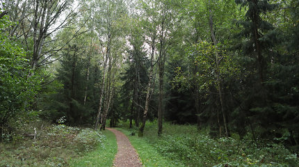 A.Muzikevičius: planuojama panaikinti 5 proc. mokestį miškų savininkams