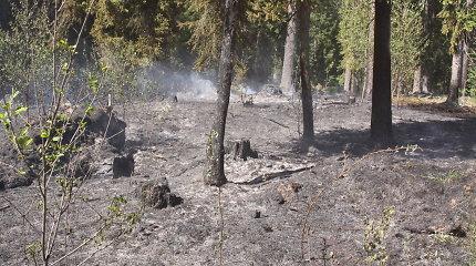 Gaisrų tikimybė miškuose – vis dar labai didelė