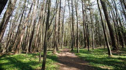 Aplinkos ministerija: prezidentūros iniciatyva labiau riboti miškų kirtimus neturės didelio poveikio