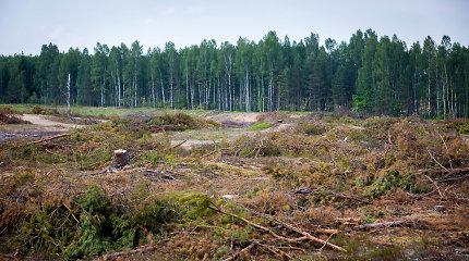 Latvijos miško pramonės produkcijos eksportas išaugo trečdaliu, importas – 1,5 karto
