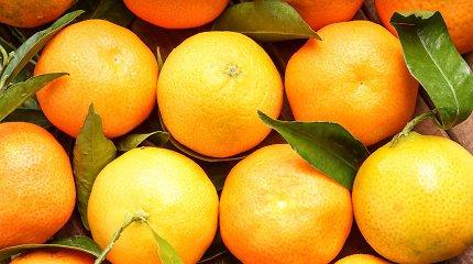 Ekspertė išvardino, kuo klementinai skiriasi nuo mandarinų? Gaivių desertų receptai