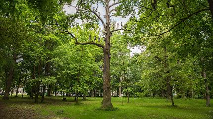 Tvarkyti Ąžuolyno parką Kaune tikimasi pradėti rudenį