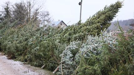 Petkiškių miške dingo 120 eglučių, Kruopių gyventojas pasigedo 10 tūkst. eurų vertės pesticidų