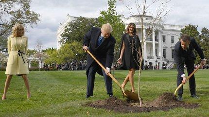 Vašingtone nunyko D.Trumpo ir E.Macrono draugystę simbolizavęs medelis