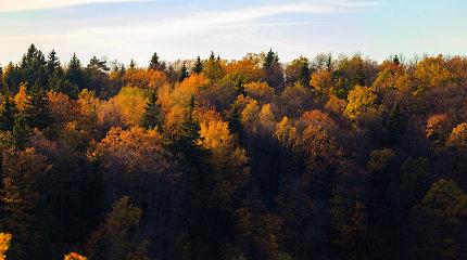 Seimas linkęs palengvinti kai kurių miestų plėtrą miškų sąskaita