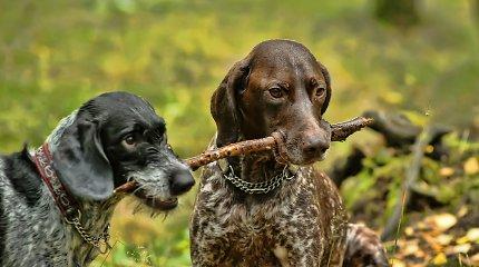 Seime į priekį juda pataisos dėl didesnių baudų už žiaurų elgesį su gyvūnais