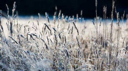Naktinės šalnos Lietuvoje: vietomis temperatūra siekė beveik 10 laipsnių šalčio