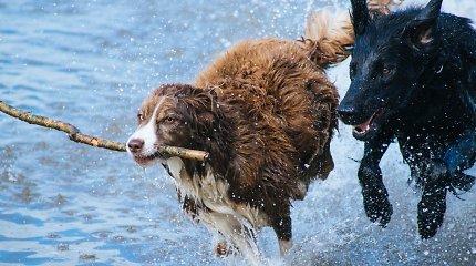 Į gamtą su augintiniu: veterinarės patarimai, kaip tinkamai pasiruošti išvykoms su šuniu