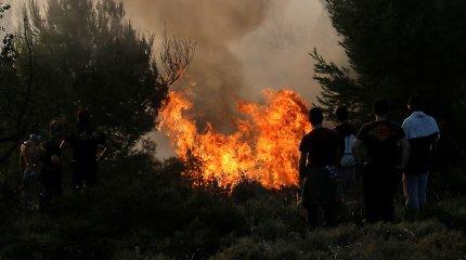 Netoli Atėnų siaučia didelis miško gaisras