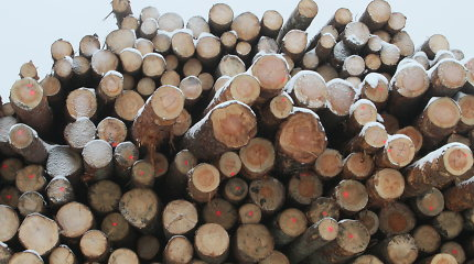 Nepalaikė net savi: Seimas atmetė korupcinėmis išvadintas medienos pardavimo taisykles