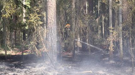 Apie gaisrą Pilėnų miške pranešė į Kauno oro uostą parskrendančio lėktuvo įgula
