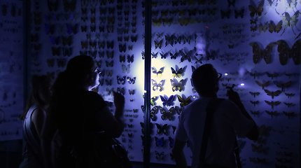 7 Muziejų nakties renginiai, kurių vertėtų nepraleisti