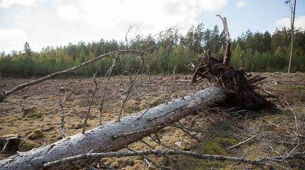 Vyriausybės peticijų komisija svarstys, ar sumažinti metinę miškų kirtimo normą