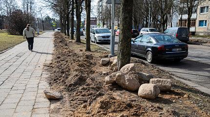 Vilniaus Lazdynuose apšvietimas gerintas nesaugant medžių: traukiasi taip dirbusios bendrovės direktorius