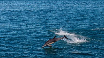 Meksikos vyriausybė sustabdė išmokas žvejams, skirtas išgelbėti nykstančią delfinų rūšį
