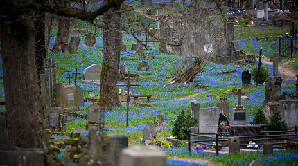 Nuostabaus grožio pavasaris: senąsias Vilniaus kapines papuošė gėlių jūra