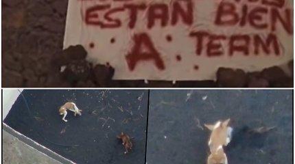 """""""A komanda"""" per paslaptingą operaciją išgelbėjo La Palmoje lavos įkalintus šunis"""