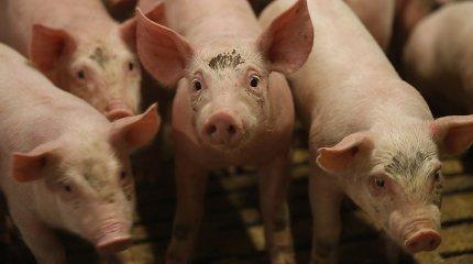 """""""Idavang"""" likvidavo afrikinio kiaulių marų židinį"""
