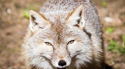 Karpiškių žvėrynėlis: vieta, kur gyvena įvairiausi paukščiai ir vilkai