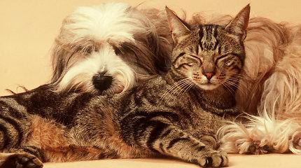 """Įžūlūs kenkėjai ir senų """"panų"""" favoritai: kaip gyveno katės ir šunys tarpukario Lietuvoje?"""