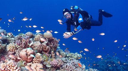 Sumažėjęs turistų skaičius Šarm aš Šeiche – didžiulė nauda koraliniam rifui