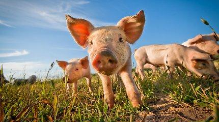 Kanada pranešė apie žmogaus užsikrėtimo retos atmainos kiaulių gripu atvejį