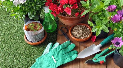 Svarbiausi gegužės mėnesio darbai sode ir darže. Augalų ekspertė pataria