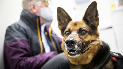 """Įsigaliojus privalomam gyvūnų ženklinimui, žemės ūkio ministras K.Navickas suskubo """"čipuoti"""" savo kalytę Arą"""