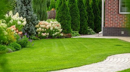 Kaip sėti veją ir kuris būdas greičiausias: pataria agronomas T.Gurskas