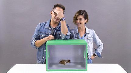 """""""Atspėk, kas dėžėje"""": išgirdę šou taisykles Simona Bandita ir Orijus Gasanovas pakraupo"""