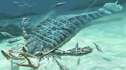 Kinijoje aptiktas senovinis šuns dydžio jūrų skorpionas