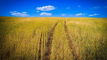 Sausra ir atima derlių, ir parodo gilesnes problemas