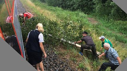 Prie Senųjų Trakų ant geležinkelio užvirtęs medis sustabdė traukinį