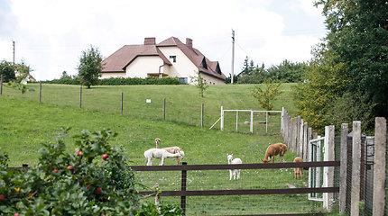 Jonavos mieste auginamos alpakos