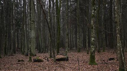 Europos Sąjungos Teisingumo Teismas: Belovežo girią kirtusi Lenkija pažeidė ES direktyvas