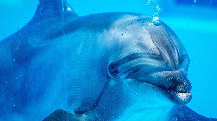 Delfinų likimas: į Graikiją iškeliavę delfinariumo gyventojai sugrįžo ne visi