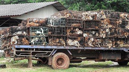 Tailande tūkstantis šunų išgelbėta nuo žiaurios mirties puode