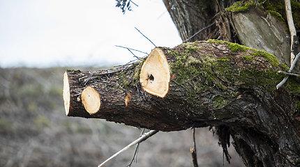 Trakų rajono savivaldybė dėl iškirstų medžių kreipėsi į AAD: prašo atlikti tyrimą