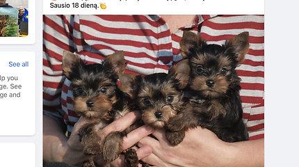 Lengvatikiai viliasi laimėti kilmingą šuniuką, nors veisėjai tokių dovanų nedalina